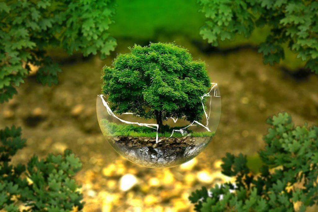 déchets verts conseils paillage économie temps budget et temps by Décoration et Jardins